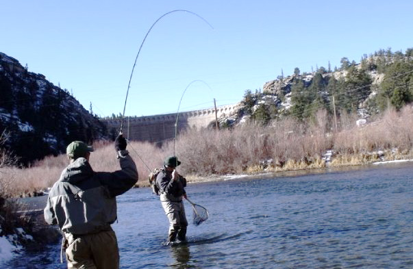 Colorado winter fly fishing guide where to fish what for Eleven mile canyon fishing