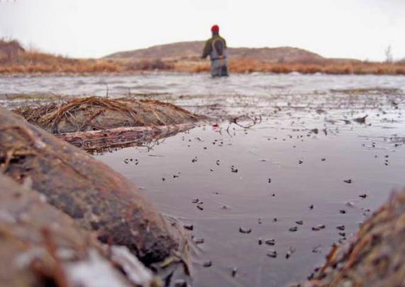San juan river fly fishing info below navajo dam nm for Fish heads san juan