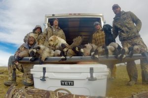 15783-Duck and Goose Update-group hunting goose-Klay Reiter