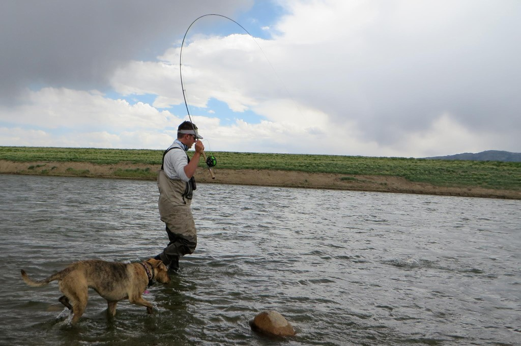 fly-fishing-with-your-dog.jpg
