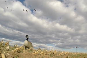Geese fly pattern per Minturn Anglers Guide
