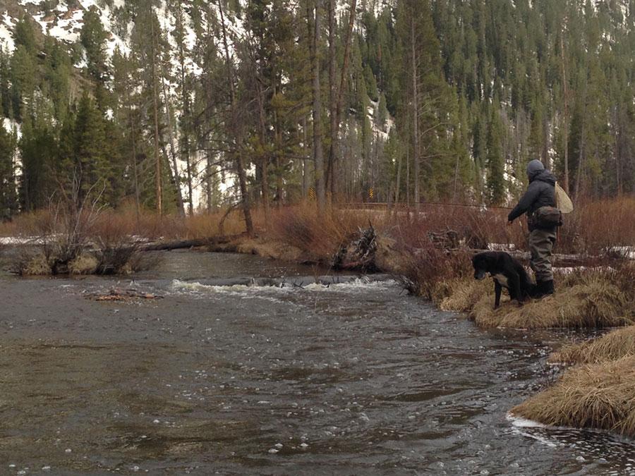 Homestake Creek Colorado