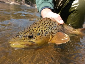 Fly Fishing Vail Colorado: Handle fish carefully