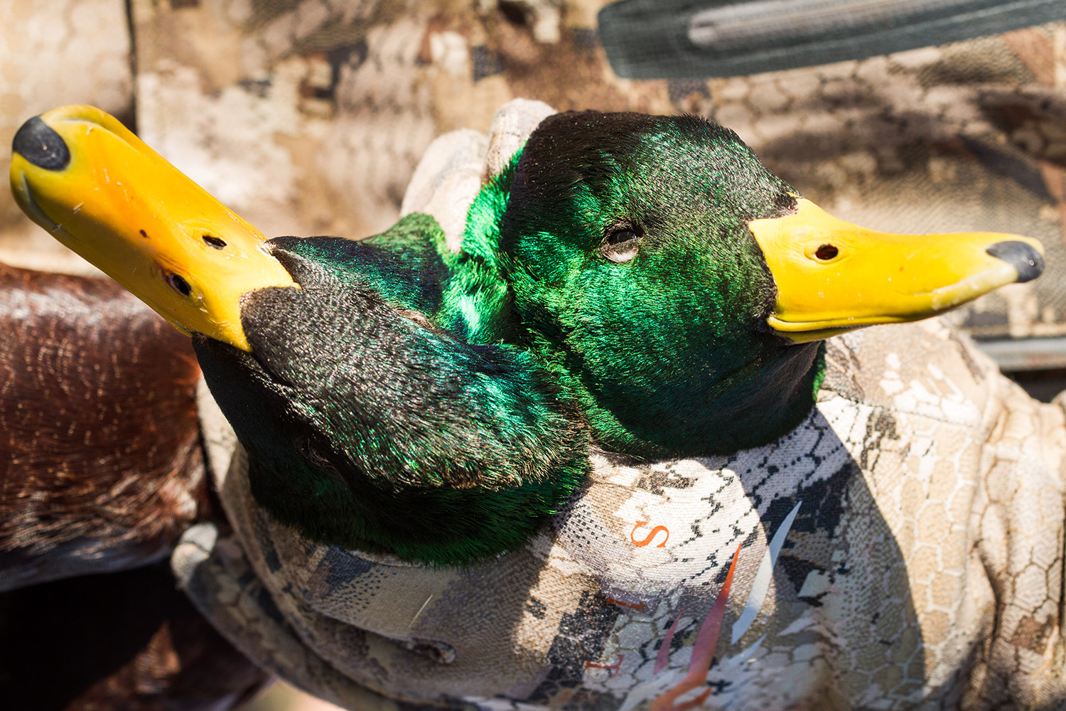 Minturn Anglers Waterfowl hunting school