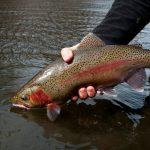Dream stream near denver - Minturn Anglers